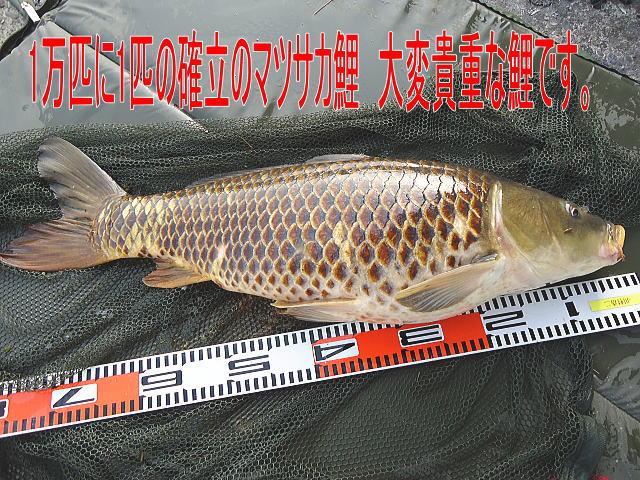 2013/06/17 長良川水系